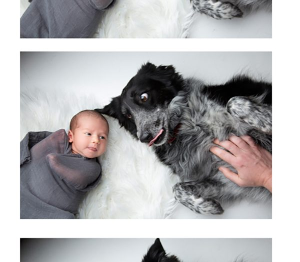 Pet Friendly Family Portraits